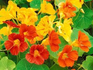 Lista-de-combinacion-de-sabores-de-flores-hierbas-y-vegetales
