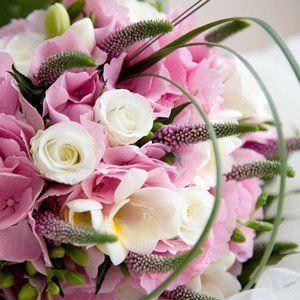 Lista De Flores Comunes Ycomo