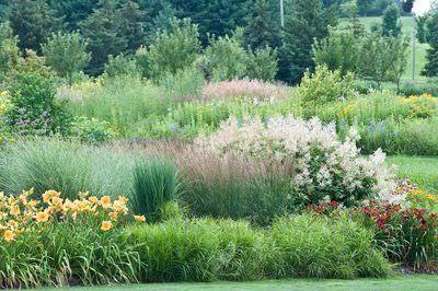 plantas para un jardin silvestre