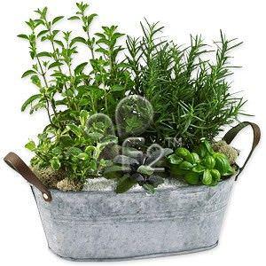 hierbas comestibles