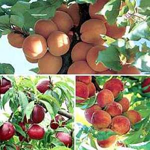 árboles con frutas