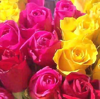 rosas3546.jpg