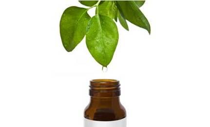 usos-del-aceite-de-arbol-de-te