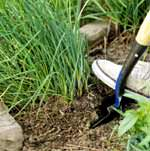hombre cavando puerros