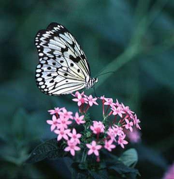 el-mejor-momento-para-podar-un-arbusto-de-mariposas