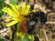 Insectos beneficiosos para jardines6