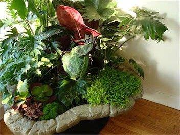 Como cultivar plantas sanas