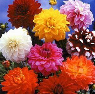 Los tipos de flores mas bonitas3
