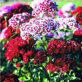 Los tipos de flores mas bonitas4