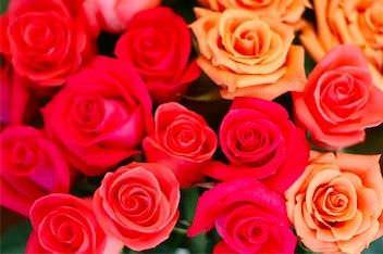 Los tipos de flores mas bonitas5