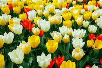Los tipos de flores mas bonitas6