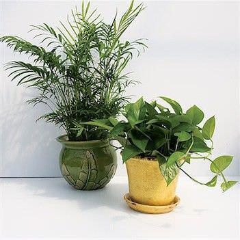 Como colocar plantas interiores en su hogar1