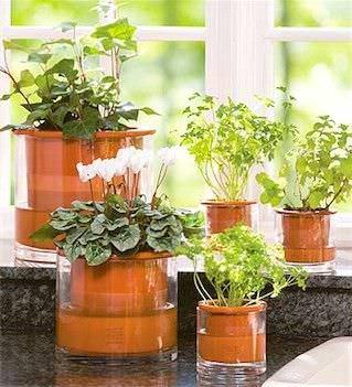Como colocar plantas interiores en su hogar2