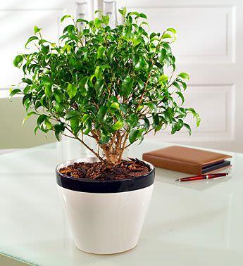 Como colocar plantas interiores en su hogar5