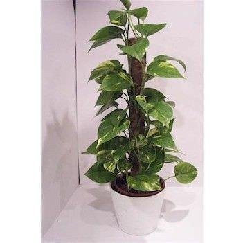 Como colocar plantas interiores en su hogar6