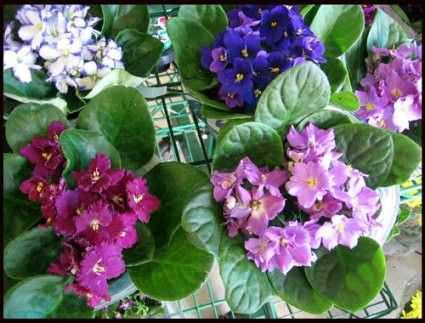 Las flores mas bonitas para el color de interior2