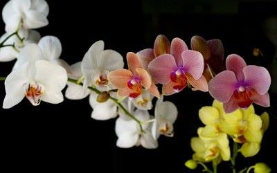 Las Flores Mas Bonitas Para El Color Interior Ycomo - Flores-interior