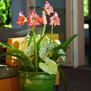 Las flores mas bonitas para el color de interior5