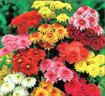 Las flores mas bonitas para el color de interior6
