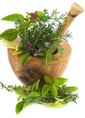 8 Hierbas medicinales que usted puede cultivar1