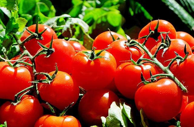 Aproveche los muchos beneficios medicinales de los tomates.