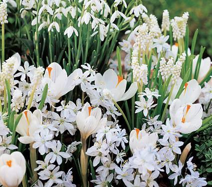Cómo Crear un Jardín de Flores Blancas - yComo