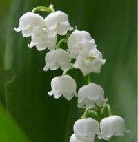 Cmo Crear un Jardn de Flores Blancas yComo