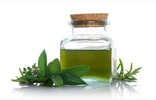 Como extraer aceite de menta de las hojas