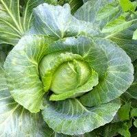 Los 5 mejores vegetales para bajar de peso2