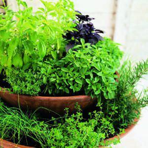 Cual es la mejor combinacion de hierbas para cultivar en una maceta