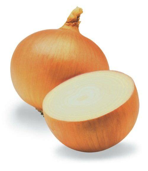 Cultivar un suministro interminable de cebollas con fondos de cebollas viejas1