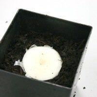Cultivar un suministro interminable de cebollas con fondos de cebollas viejas4