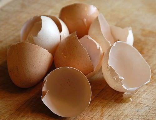 Mantenga las babosas y los insectos lejos de su jardin con cascaras de huevo