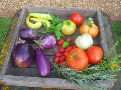 Frutas y verduras para jardines interiores1