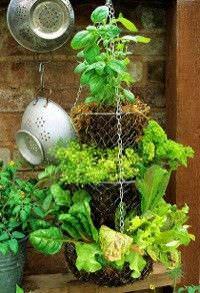 Frutas y verduras para jardines interiores6
