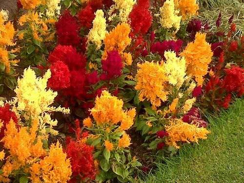3 Plantas que usted puede sembrar en su jardin este otono