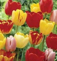 3 Plantas que usted puede sembrar en su jardin este otono2