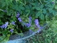3 Plantas que usted puede sembrar en su jardin este otono3