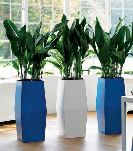 Las mejores plantas interiores para purificar el aire