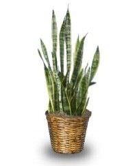 Las mejores plantas interiores para purificar el aire1