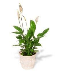Las mejores plantas interiores para purificar el aire2