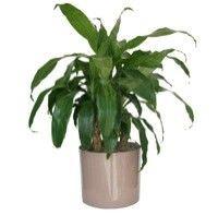 Las mejores plantas interiores para purificar el aire3