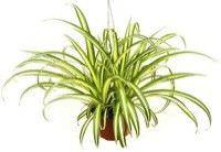 Las mejores plantas interiores para purificar el aire4