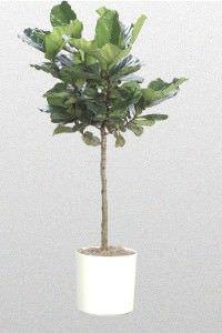 Las mejores plantas interiores para purificar el aire5