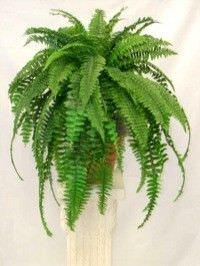 Las mejores plantas interiores para purificar el aire7