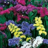 Tipos de flores para secar1