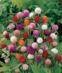 Tipos de flores para secar2