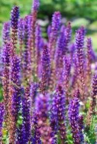 Tipos de flores para secar4