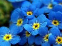 Lista de Flores que crecen en la sombra2