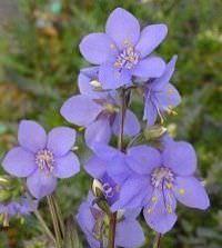 Lista de Flores que crecen en la sombra3